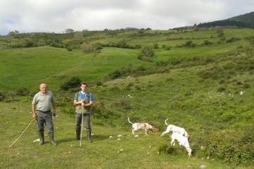 XXIII Campeonato Regional de perros de rastro modalidad liebre
