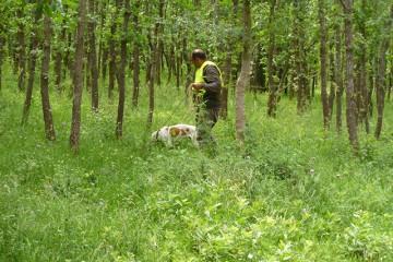 Campeonatos perros de rastro sobre Jabalí